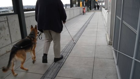 Visually impaired person walking with cane and service dog on new terminal's tactile pathway.